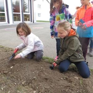 Katharina und Ida beim Pflanzen
